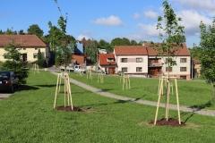 Výsadba stromů v Mistřicích